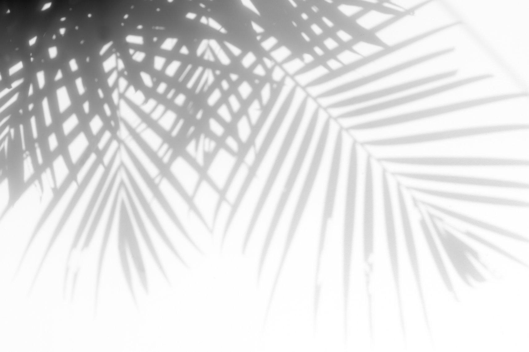 palmshadow.jpg