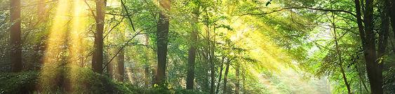 forest image ella and alasdair.jpg