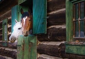 Horses in the barn closeup.jpg