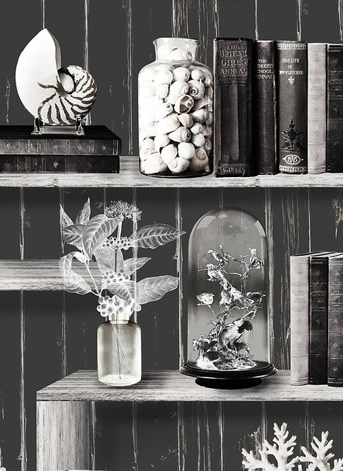 Wallpaper Sample - Curiosity Cabinet - Charcoal