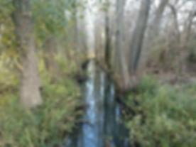 Wetland ID Residential Property Dev.jpg