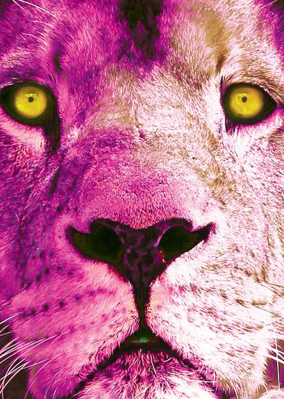 pink_lion_50_70.jpg