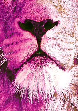 pink_lion_nose.jpg