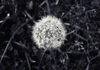 White flower-01.jpg