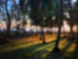 IMG_4531[1].jpg