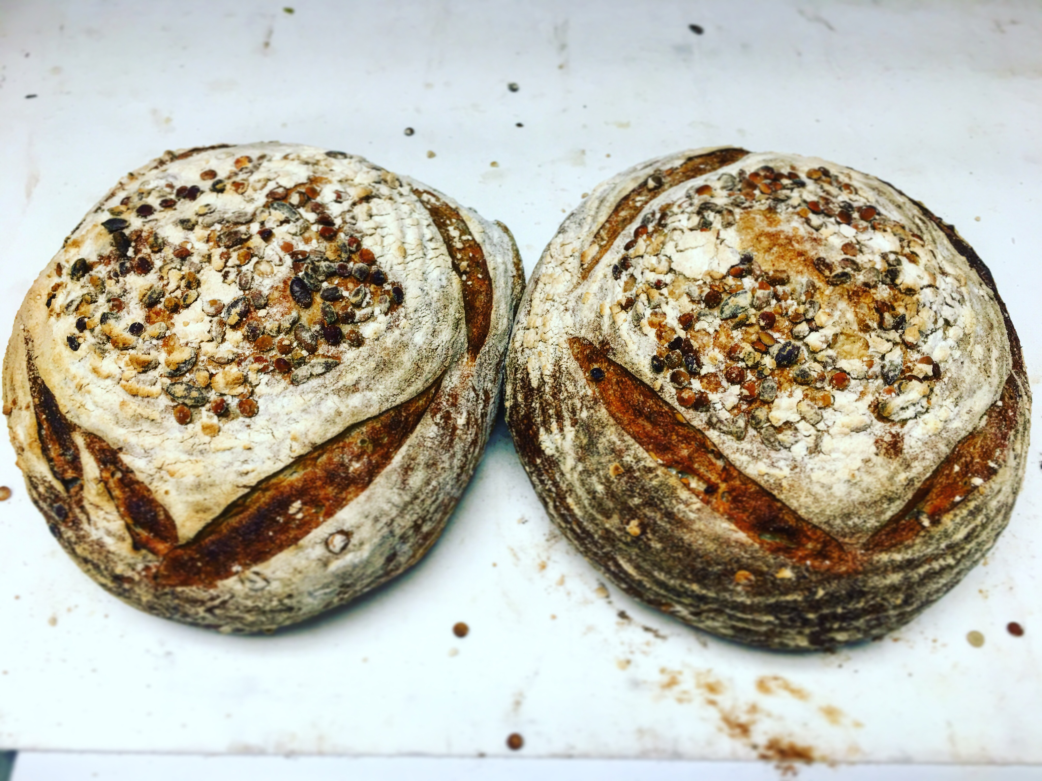 SD Round Buckwheat Multigrain