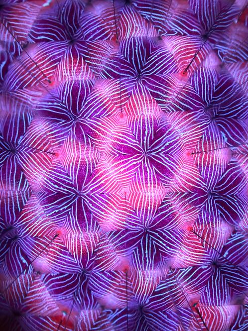 Kaleidoscope No.3