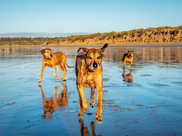 Cassies dogs.jpg