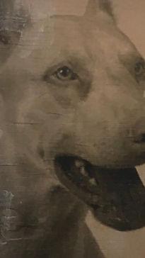 schirinhundi.jpg