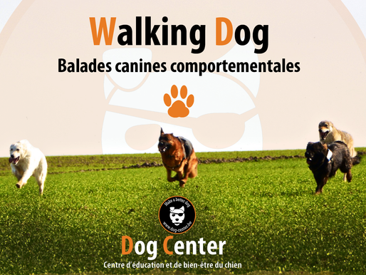 Walking Dog : balades canines made in Dog Center