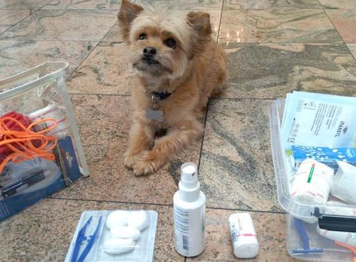 Secourisme canin : Trousse de premiers secours enfin disponibles !