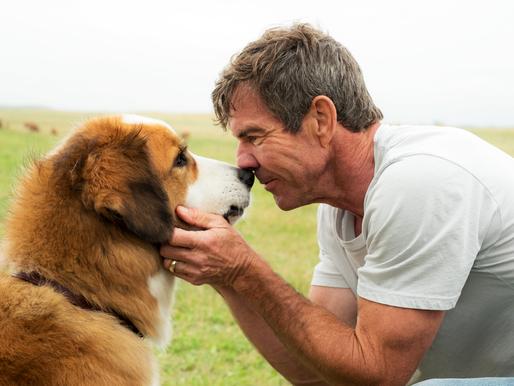 Mes vies de chien: des places à remporter!