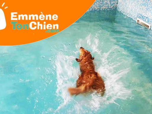Dog Pool : un chouette témoignage sur Emmenetonchien.com !
