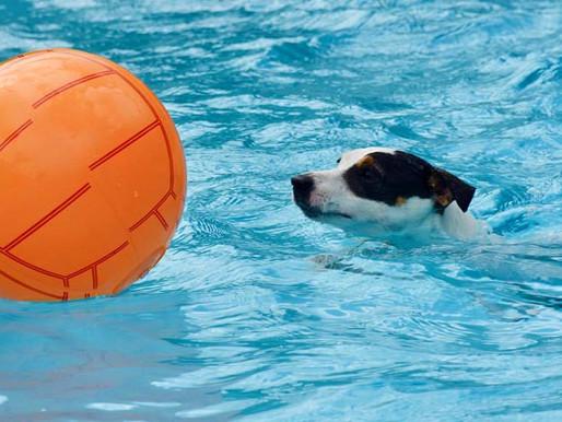 Dog Pool : 50% de réduction ! Il reste quelques places !