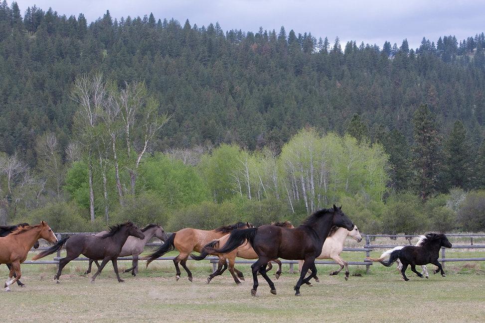 River Pines Horse Sanctuary   Missoula, Montana