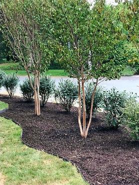 The Rose Gardener Landscaping Frederickburg Virginia