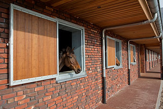 horse stable doors and shutters