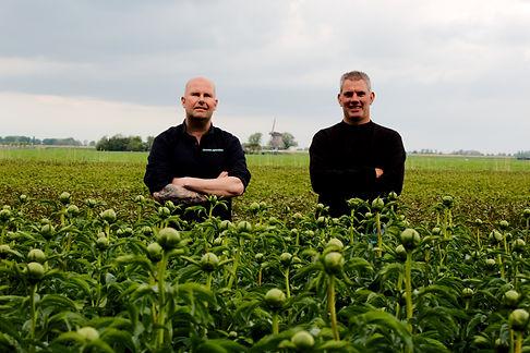 Molenaar Agriculture Premium Peony Sellers