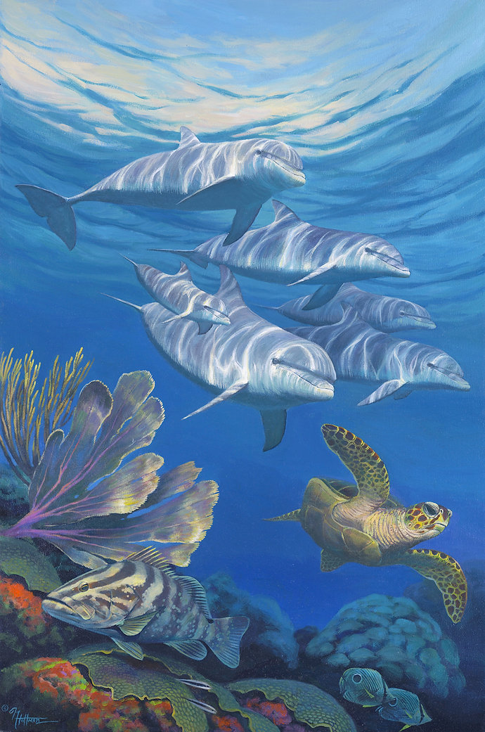 Marine Life Fine Art