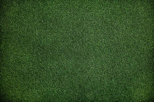 grass-3253361_1920.jpg