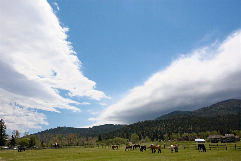 forever home for neglected and abused horses montana River Pines Horse Sanctuary Montana