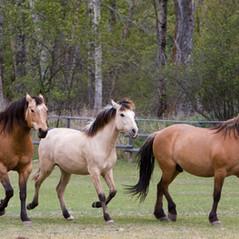 River Pines Horse Sanctuary | Missoula, Montana