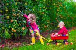 Virginia Apple Industry