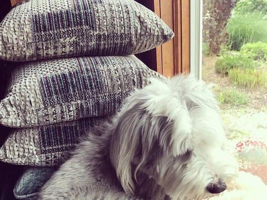 Pet Friendly Fabrics