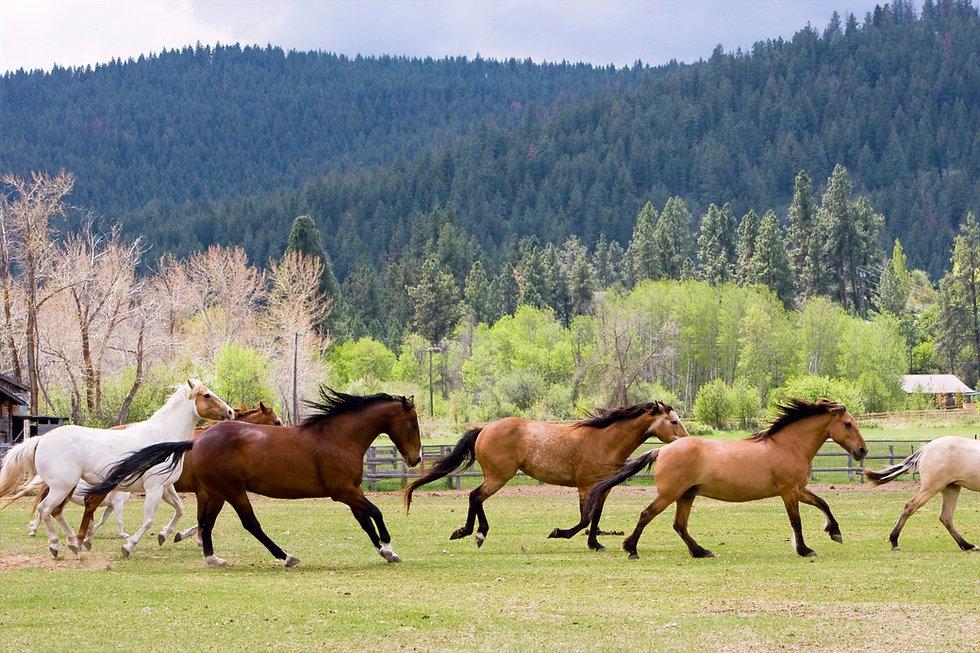 River Pines Horse Sanctuary