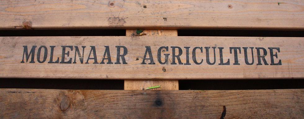 Molenaar Peony Agriculture