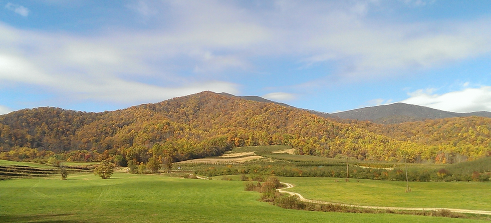Local Apple Orchards in Virginia