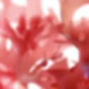 algue rouge pour soin et produit cosmétique