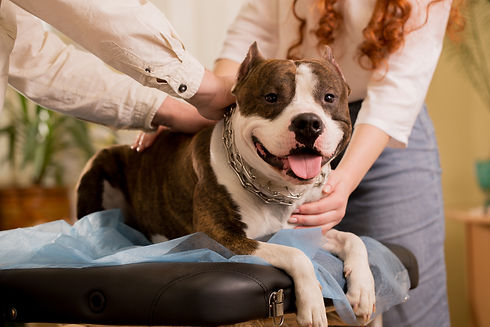 Reiki Masters healers Heals Animals in R