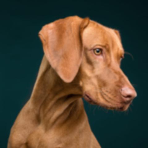 dog-3277417.png