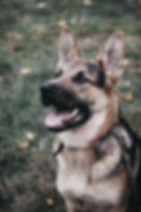 Lost%20puppy%20from%20Kiev%2C%20Ukraine.%20He%20want%E2%80%99s%20to%20find%20a%20family._edited.jpg