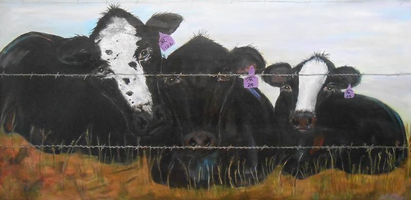 Arts Cows
