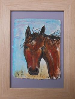 Sunny Sky's Horse Cialo