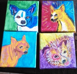 Susan's Chihuahuas