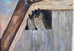 Rocking EB Owls