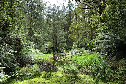 rainforest_tas_field.jpg