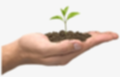 soil-in-hand-png-seed-growing-in-hand.pn