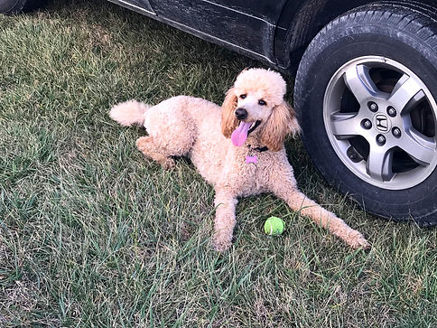 Ginger%20loves%20to%20play%20fetch_edite