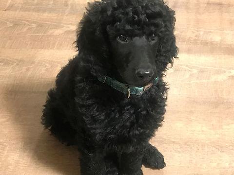 Rocky at 8 weeks.jpg