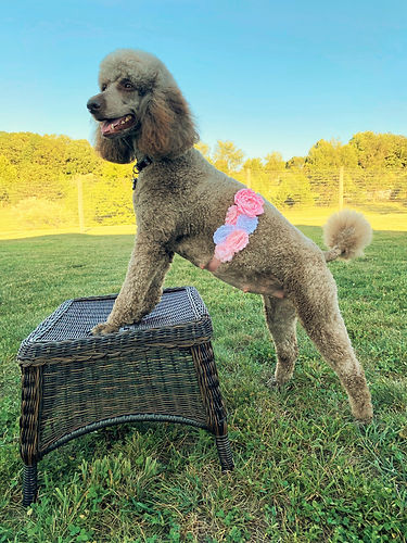 Maryann, standing on wicker hassock, pin