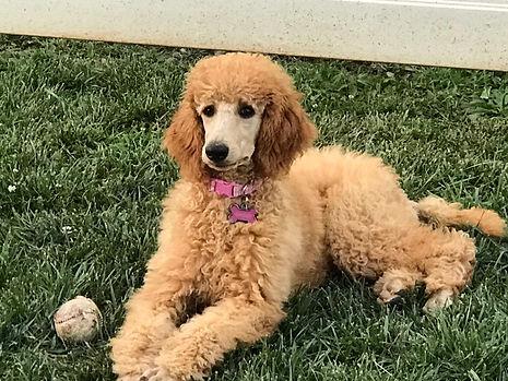 Ginger, 4 months.jpg