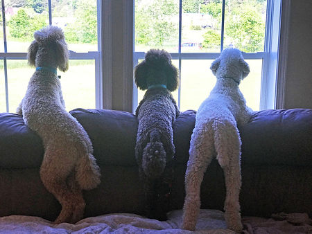 Three amigos longing to go out and play.