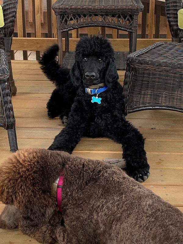 Bonnie 9 months with Rocky..jpg