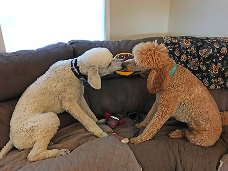 Ginger and Skipper sharing a donut.jpg