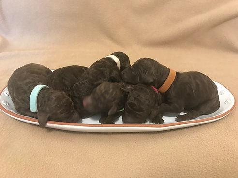 Pups on a plate.jpg
