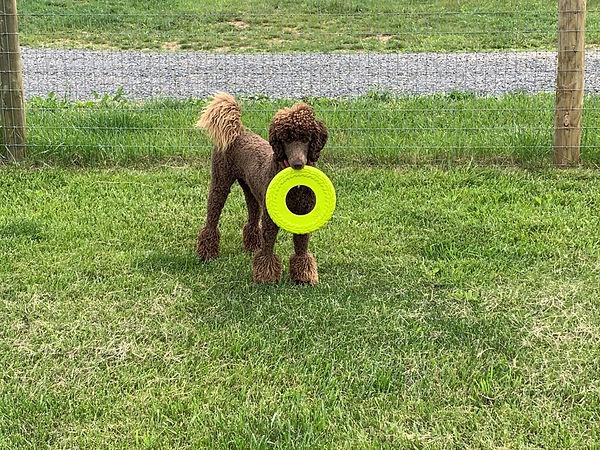 bonnie with frisbee.jpg